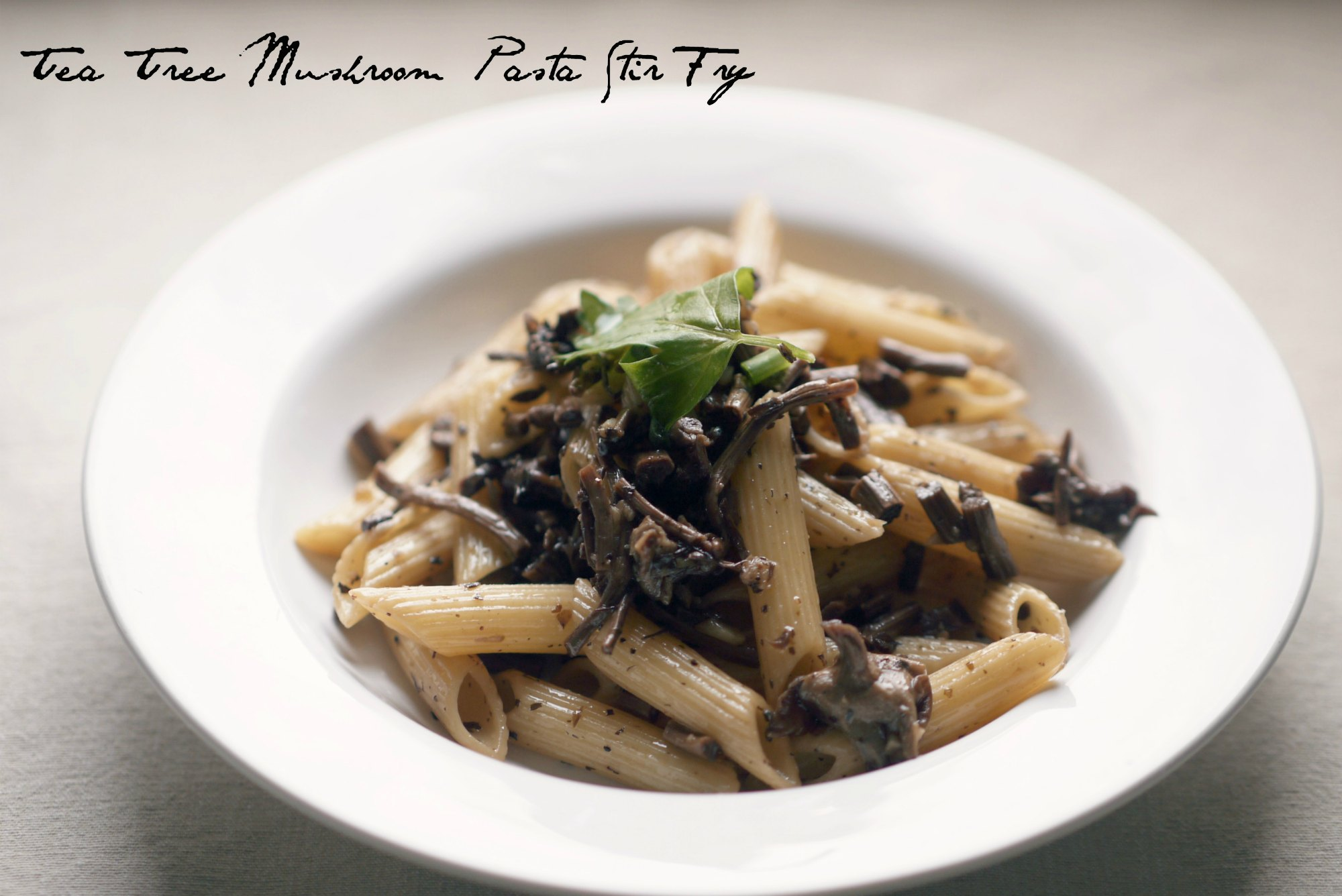 Tea Tree Mushrooms Pasta Stir Fry Mono And Co